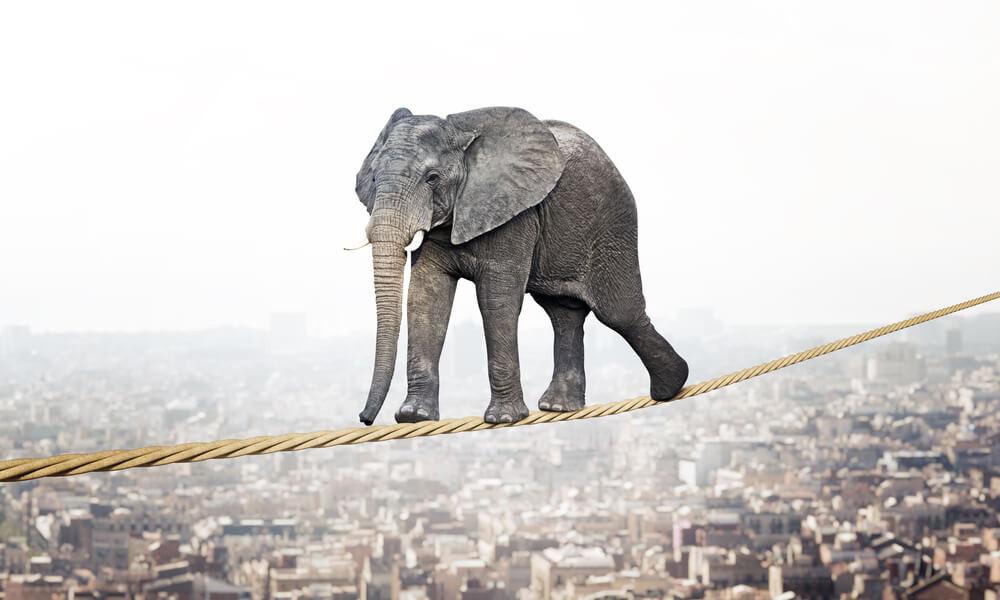 高層ビルをつなぐ細いロープの上を、ゾウが渡っている