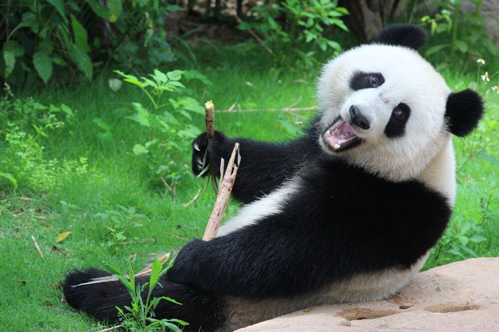 国際結婚に反対する両親を説得して連れて行った中国で見たパンダ