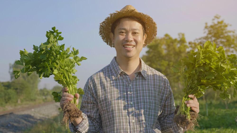 技能実習制度で農業に従事するアジア人男性